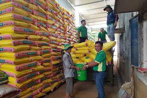 Nguồn sống 'Phú Mỹ' cho mùa mưa Tây Nguyên