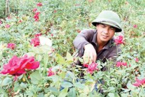'Vườn tình yêu' toàn hồng ta giá tiền tỷ của chàng trai quê lúa