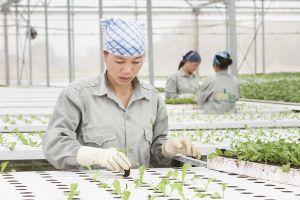 Đột phá công nghệ để 'định vị' nông sản Việt