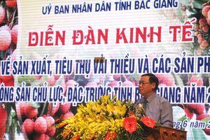 Bắc Giang: Vải thiều được mùa, được giá