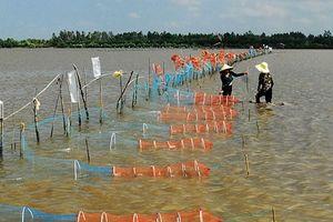 Sau phản ánh của Báo Lao Động, Chủ tịch Cà Mau chỉ đạo chấn chỉnh việc nuôi sò tại Đầm Thị Tường