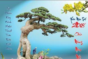 Cây Duối: Vua của các loài cây, cây cảnh cây thuốc quý