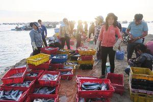 Chùm ảnh: Nhộn nhịp bến cá buổi rạng đông trên đảo Phú Quý