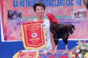 Độc đáo cuộc thi 'hoa hậu gà' làng Lạc Thổ