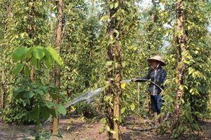 Mozambique đánh giá hiệu quả hợp tác nông nghiệp với Việt Nam