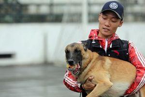Ly kỳ thú chơi chó chăn cừu có giá ngang ô tô của đại gia Hà Thành