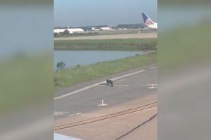 Cá sấu bò trên đường băng khiến máy bay không dám... trả khách