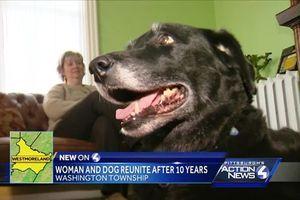 Chó tưởng đã chết cách đây 10 năm bất ngờ trở về với chủ
