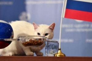 Mèo tiên tri Achilles dự đoán kết quả Nga vs Ả-rập Saudi