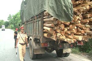 Thừa Thiên – Huế: Xử lý nhiều xe chở gỗ tràm quá tải, quá khổ