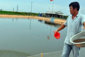 Nam Định phấn đấu thành tỉnh NTM đầu tiên của cả nước