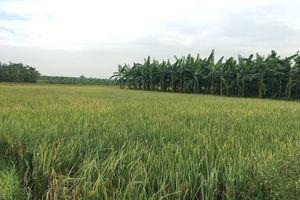 UBND tỉnh Hải Dương có 'lách luật' khi biến đất nông nghiệp thành đất bãi bồi?