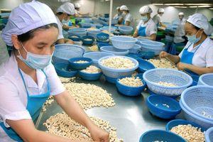 Xuất khẩu điều Việt Nam: Nghịch lý - nhà máy đóng cửa, thị trường... mở ra