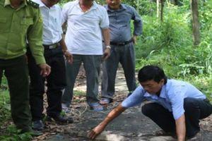 Kiên Giang: Một con kỳ đà hoa nặng 11kg bất ngờ bò vào trụ sở huyện