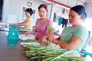 Bỏ lương nghìn đô làm nông nghiệp sạch