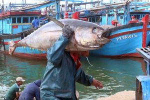 Nơi khởi đầu nghề câu cá ngừ đại dương