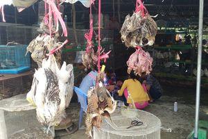Chợ nông sản tận diệt chim trời