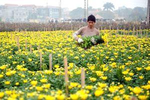 Hà Nội: Chuyển đổi đất lúa những thuận lợi và khó khăn