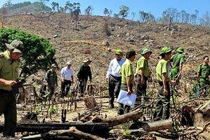 Hoãn phiên xử sơ thẩm vụ hủy hoại rừng nghiêm trọng ở Bình Định