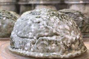 Ai dám ăn món pho mát hình não người 'mốc meo' này?