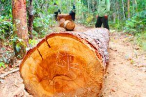 Bắt đối tượng cầm đầu 40 người đi cướp gỗ