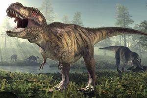 Phát hiện 300 dấu chân khủng long tại Trung Quốc