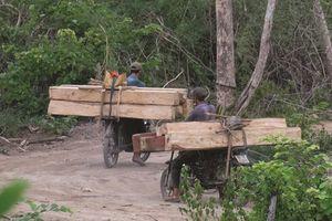 Vụ 'lâm tặc' hoành hành rừng đầu nguồn tại Ninh Hòa: Cơ quan chức năng địa phương bất lực?