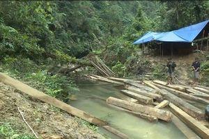 Cần sự xử lý nghiêm minh sau khi rừng bị… phá nát