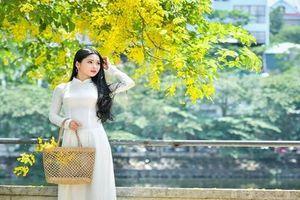 'Hot girl bánh mướt' xứ Nghệ khoe dịu dàng mùa hoa hoàng yến