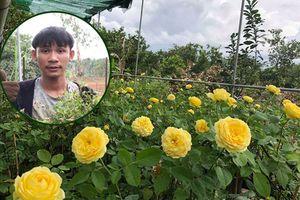 Mê mẩn trước vườn hồng ngoại với 3.000 gốc của chàng trai 9x ở Đồng Nai