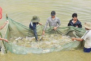 TP Vũng Tàu: Chấm dứt hoạt động Hội Nông dân thành phố và 16 phường
