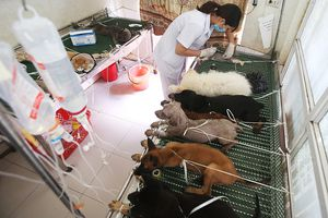 Nắng nóng đỉnh điểm, thú cưng đổ bệnh ùn ùn nhập viện ở Hà Nội