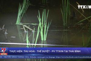 Nông dân Thái Bình cấy đêm tránh nóng