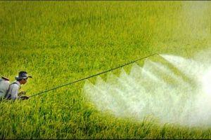 Kiên Giang chủ động phòng trừ sâu bệnh gây hại trên cây trồng