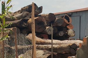 Vụ trùm gỗ lậu Phượng 'râu': Phát lệnh truy nã thêm 2 đối tượng