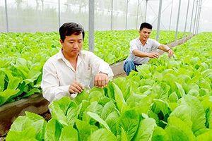 Thực hiện sơ chế, đóng gói nông sản tại chỗ: Sẽ thống nhất cách làm, xây dựng các tiêu chí cụ thể