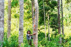 Gặp hai người Vân Kiều trồng cả triệu cây rừng bên đỉnh Trường Sơn