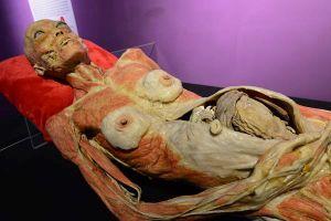 Triển lãm cơ thể người trên thế giới: Luôn gây tranh cãi dữ dội