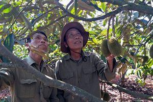 Cú 'ăn đúp' trị giá hàng trăm triệu của nông dân Đào Văn Chủy