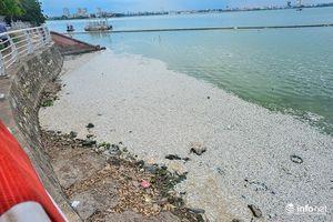 Hà Nội thông tin chính thức về hơn 20 tấn cá chết nổi trắng hồ Tây