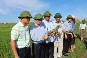 Nghệ An: Gần 6.000 ha lúa chưa thể gieo cấy do hạn