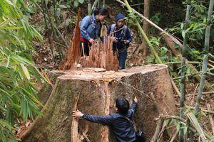 Truy nã 2 đối tượng chủ mưu vụ thảm sát rừng lim cổ thụ ở Quảng Nam