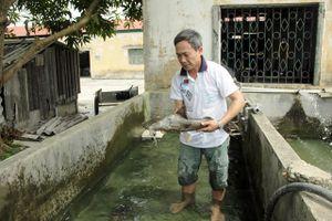 Tuyên Quang: Sản xuất thành công cá chiên quý hiếm trong điều kiện nhân tạo