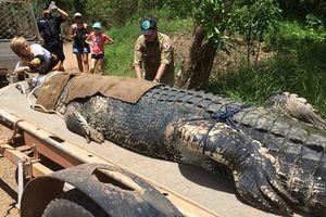 Bắt được cá sấu 'khủng' 60 tuổi, nặng đến 600kg sau 8 năm tìm kiếm