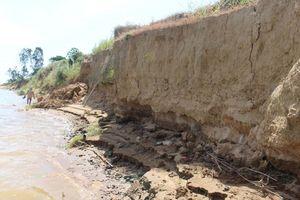 Khai thác cát trộm phá bờ sông Thu Bồn