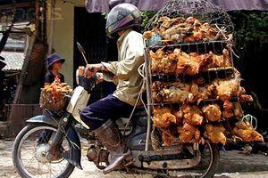 Giả nhân viên kiểm dịch lấy tiền người buôn gà