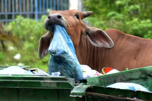 Quảng Ngãi cấp tốc chuyển rác thải vượt hơn 40 km xử lý