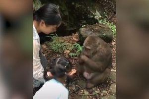 Bé gái bị khỉ tát vào mặt vì cho thiếu thức ăn