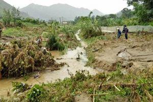 Lai Châu: Nước mắt rơi khi vò lúa non cố tìm những hạt còn ăn được