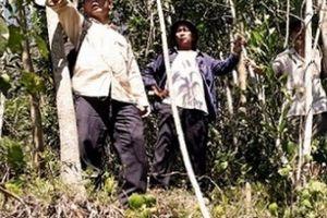 Bình Định: Phát hiện nhiều vết nứt trên núi, hàng trăm hộ dân lo sợ